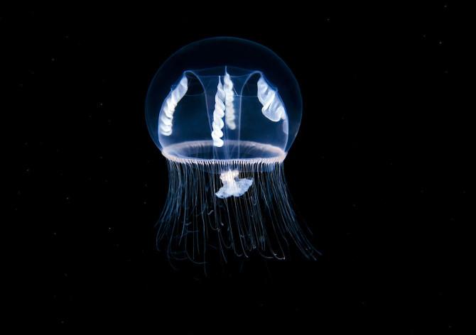 Александр Семенов фотографирует самых хрупких морских животных на Земле недалеко от Полярного круга