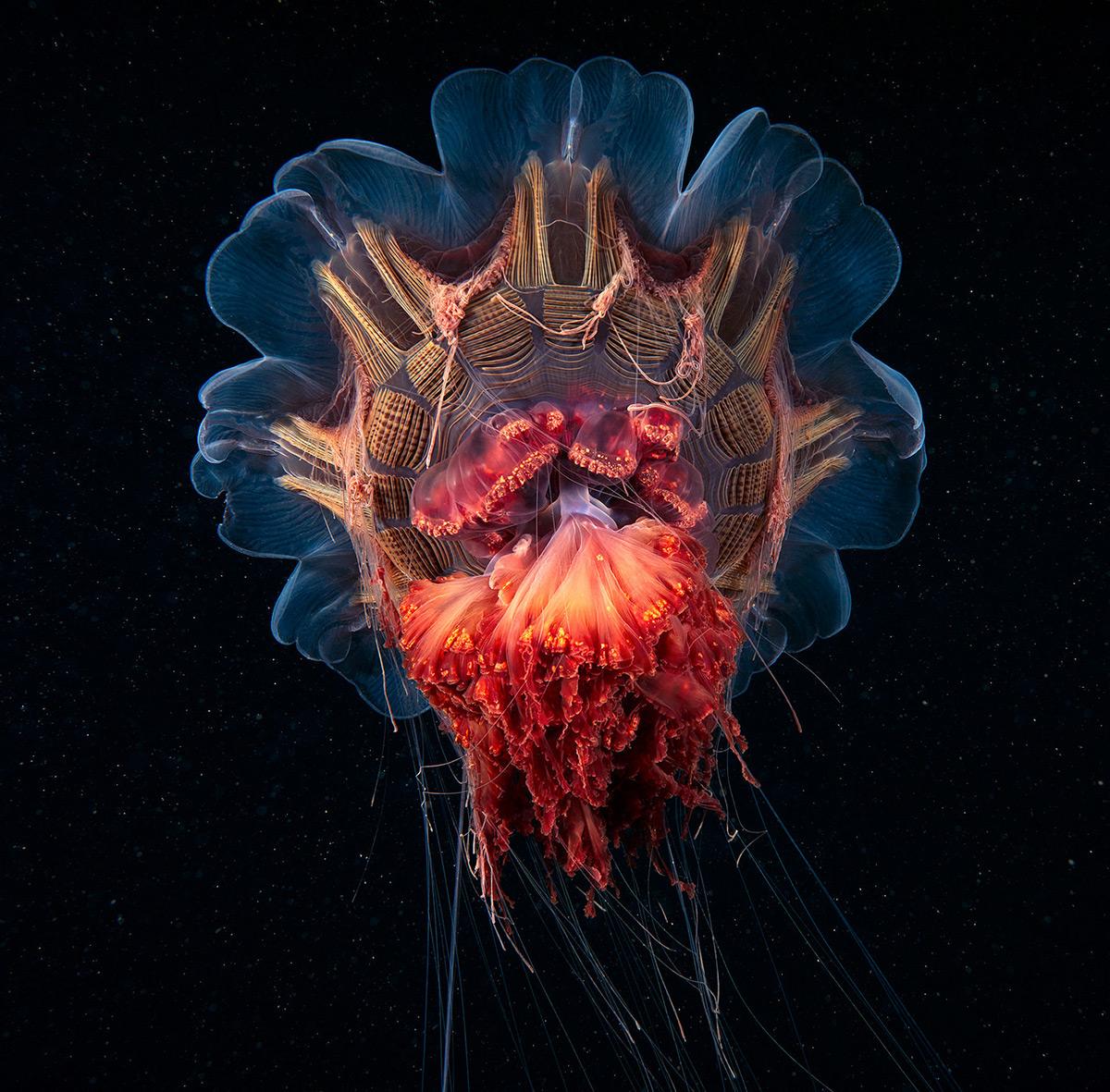 Фотографии морских животных от Александра Семенова