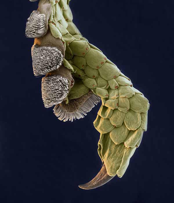 Нога геккона