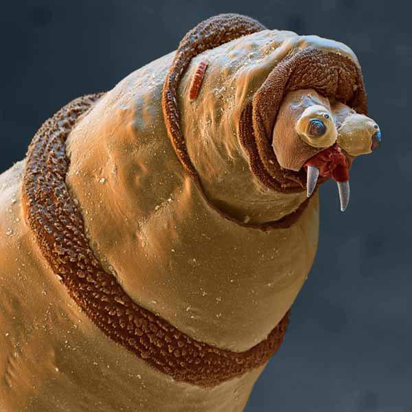 Изображения жуков и насекомых под микроскопом