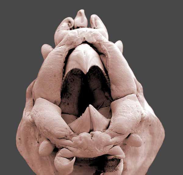 морской червь