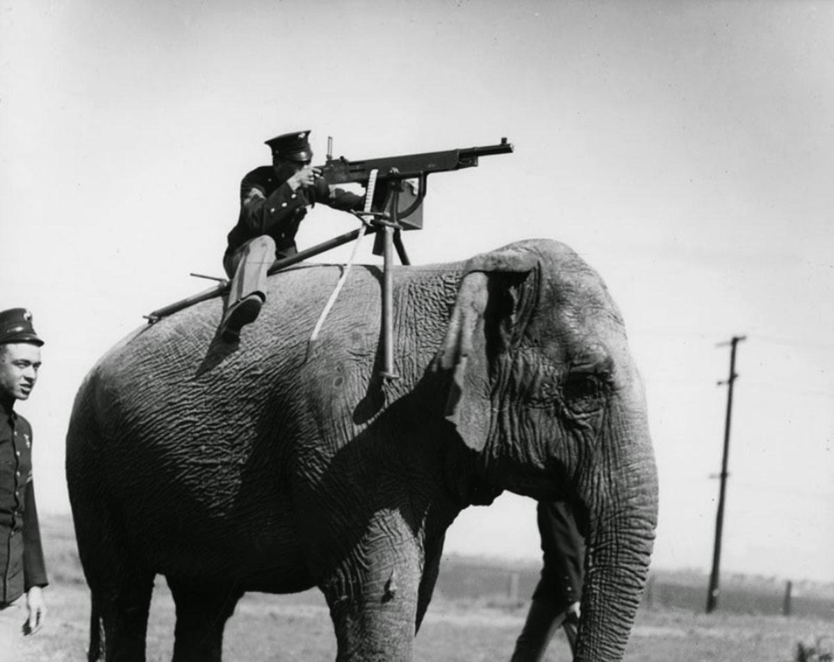 Установленный на слоне пулемёт, 1914