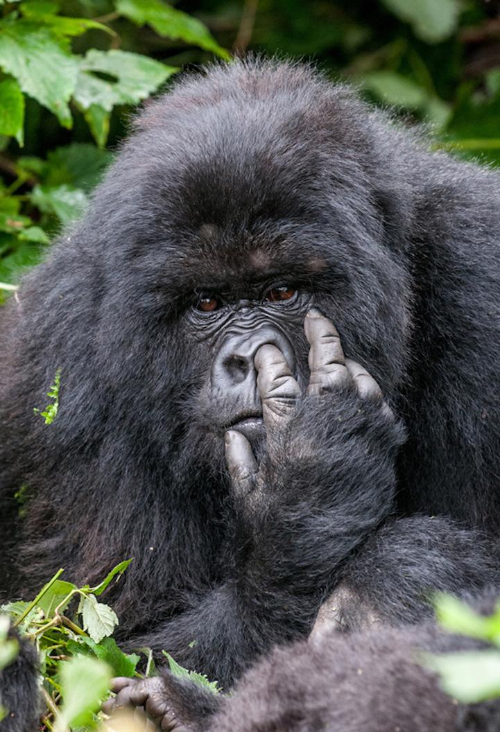Конкурс «Приколы дикой природы» (Comedy Wildlife Photography Awards)