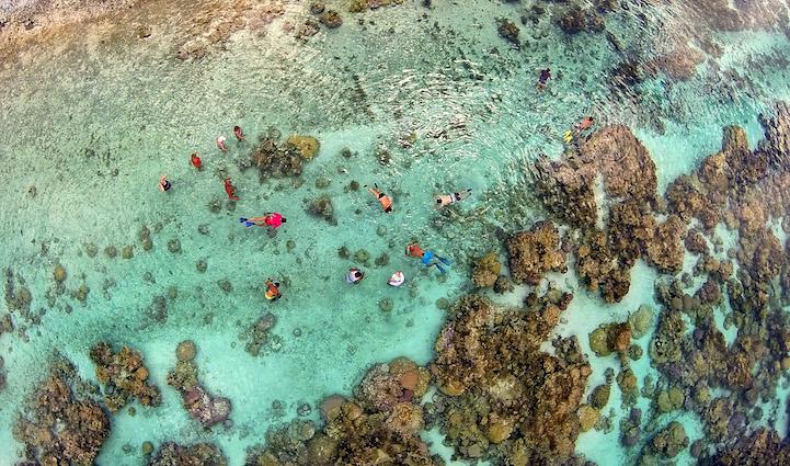 Коралловый сад в лагуне Тахаа, Французская Полинезия