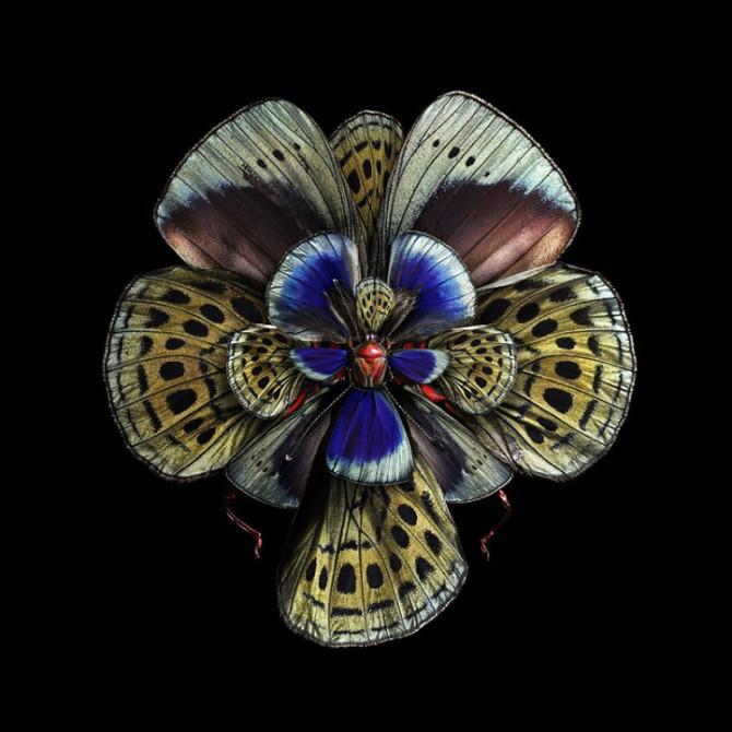 Живописный фотопроект «Мимикрия» от фотохудожника Себа Жаньяка