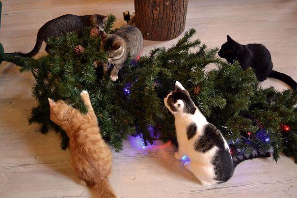 Коты, которые помогают нарядить ёлку