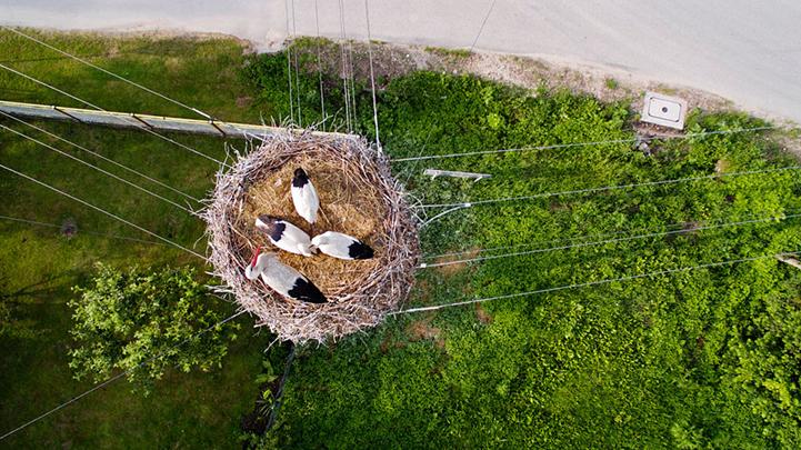 Гнездо,Польша