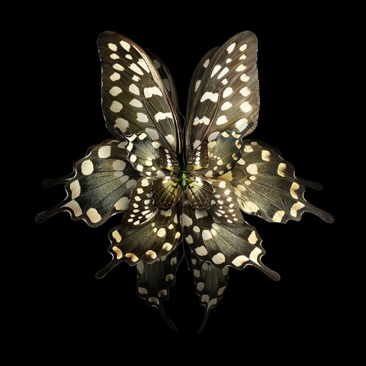 Фотопроект «Мимикрия» от Себа Жаньяка