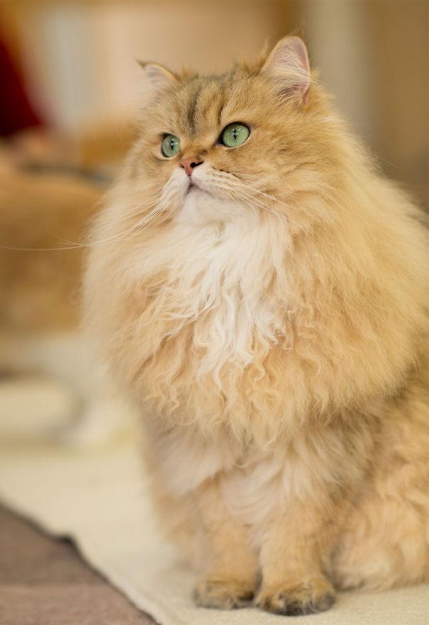 Милый пушистый кот