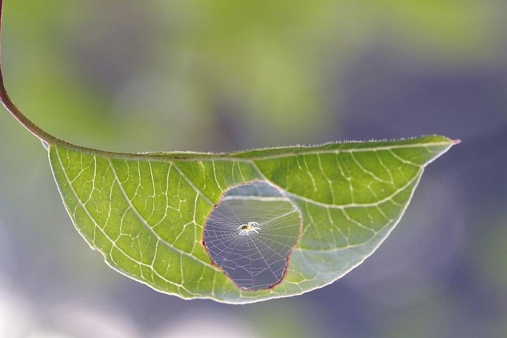 Паутина на листе