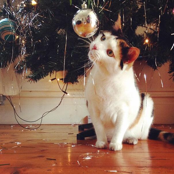 Коты помогают нарядить ёлку