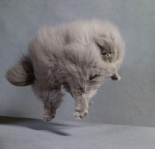 Кот подпрыгнул