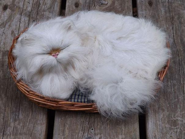 Белый кот в корзине