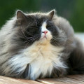 Невероятно милая подборка пушистых котов