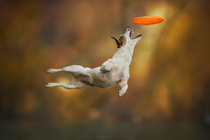 Серия снимков, которая доказывает, что собаки могут летать