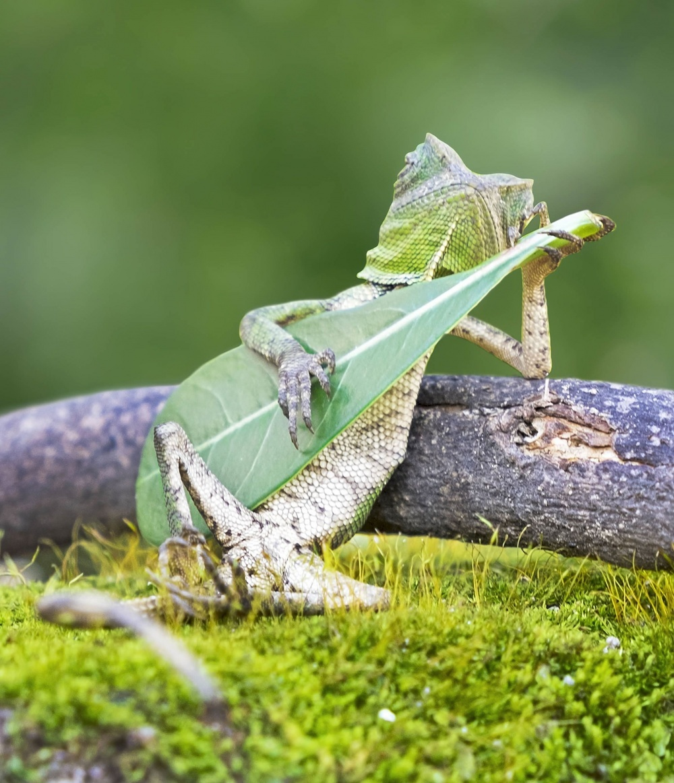 Ранго играет на гитаре
