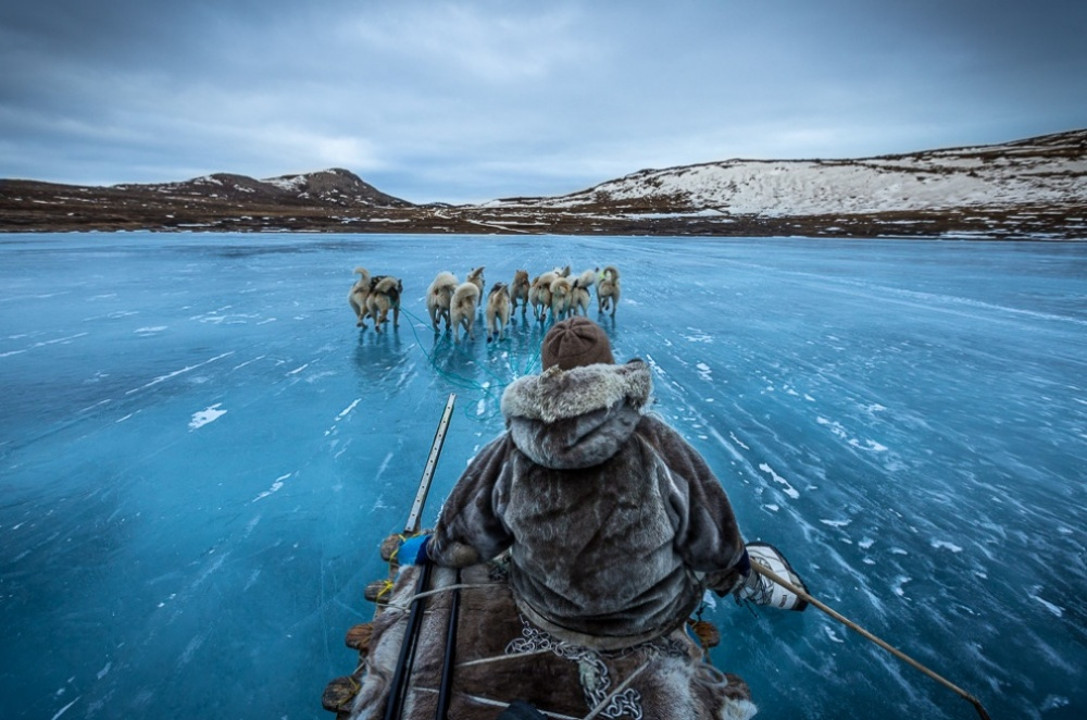 Катание на собачьих упряжках в Гренландии