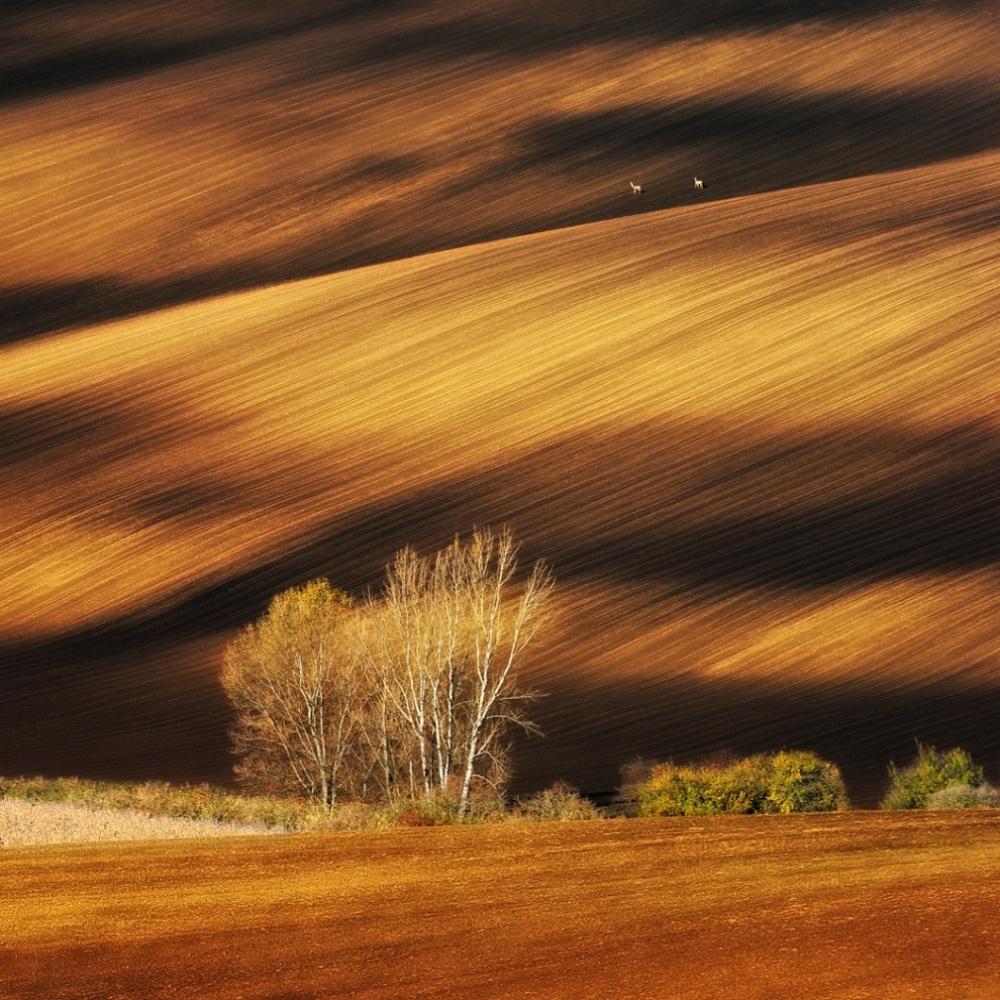 Моравские поля, Чехия