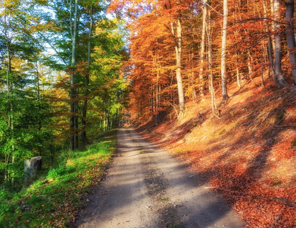 Осенний лес. Загружено 50%<