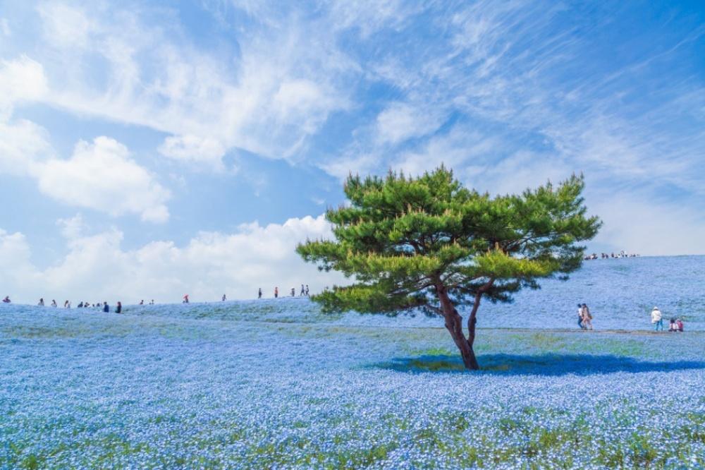 Синяявселенная в Японии