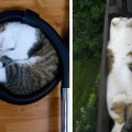 Животные, которые спят везде, где захотят