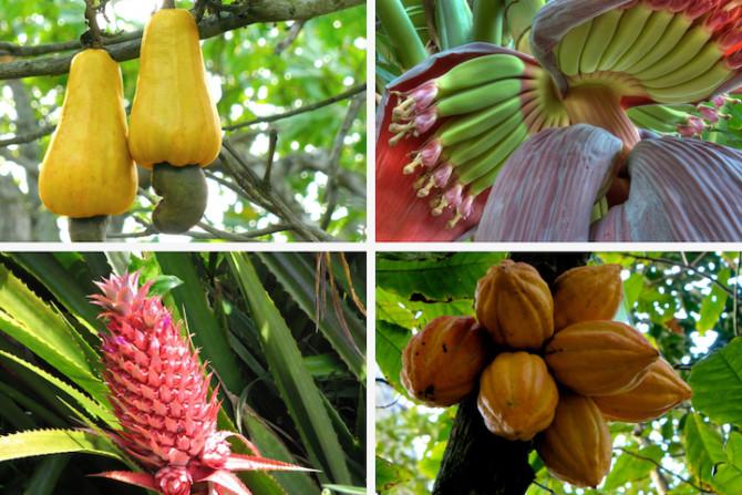 Как различные продукты растут в естественной среде
