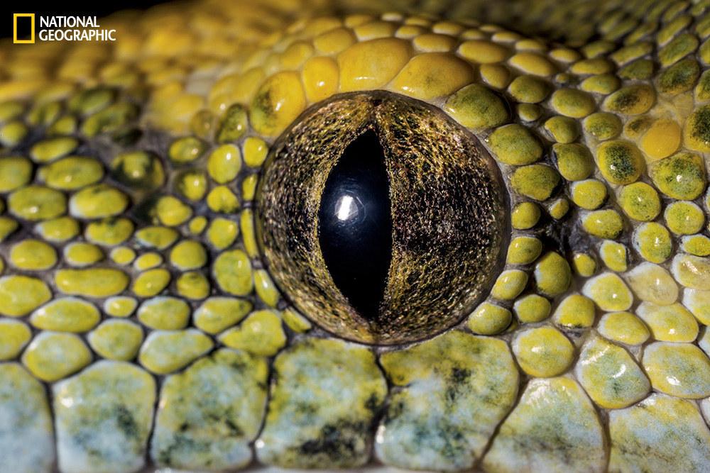 Глаз зеленого питона