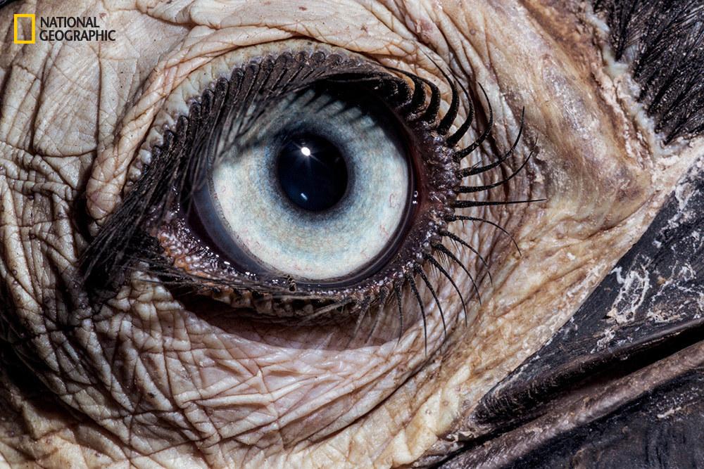 Глаз южного носорога