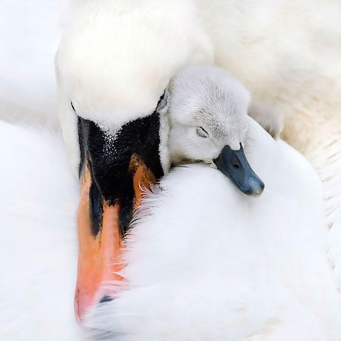 Как птицы заботятся о своих детях