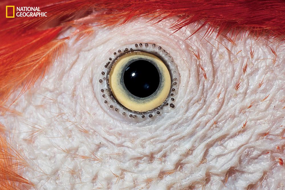 Глаза животных крупным планом