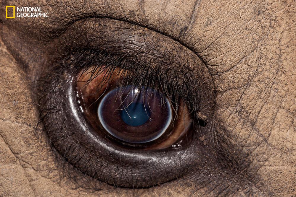 Глаз белого носорога