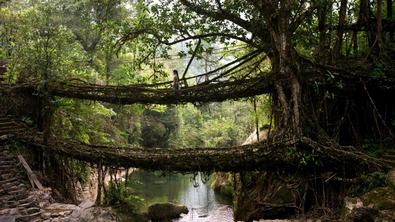 Живые мосты Черапунджи, Мегхалая, Индия
