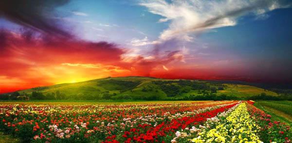 Долина цветов в национальном парке, Индия