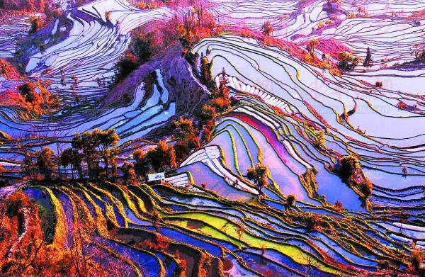 Рисовые поля в Yuanyang County, Китай