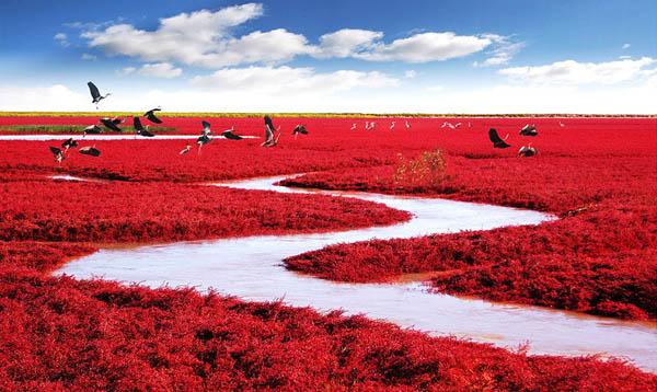 Красный пляж Паньцзинь на реке Ляохэ, Китай