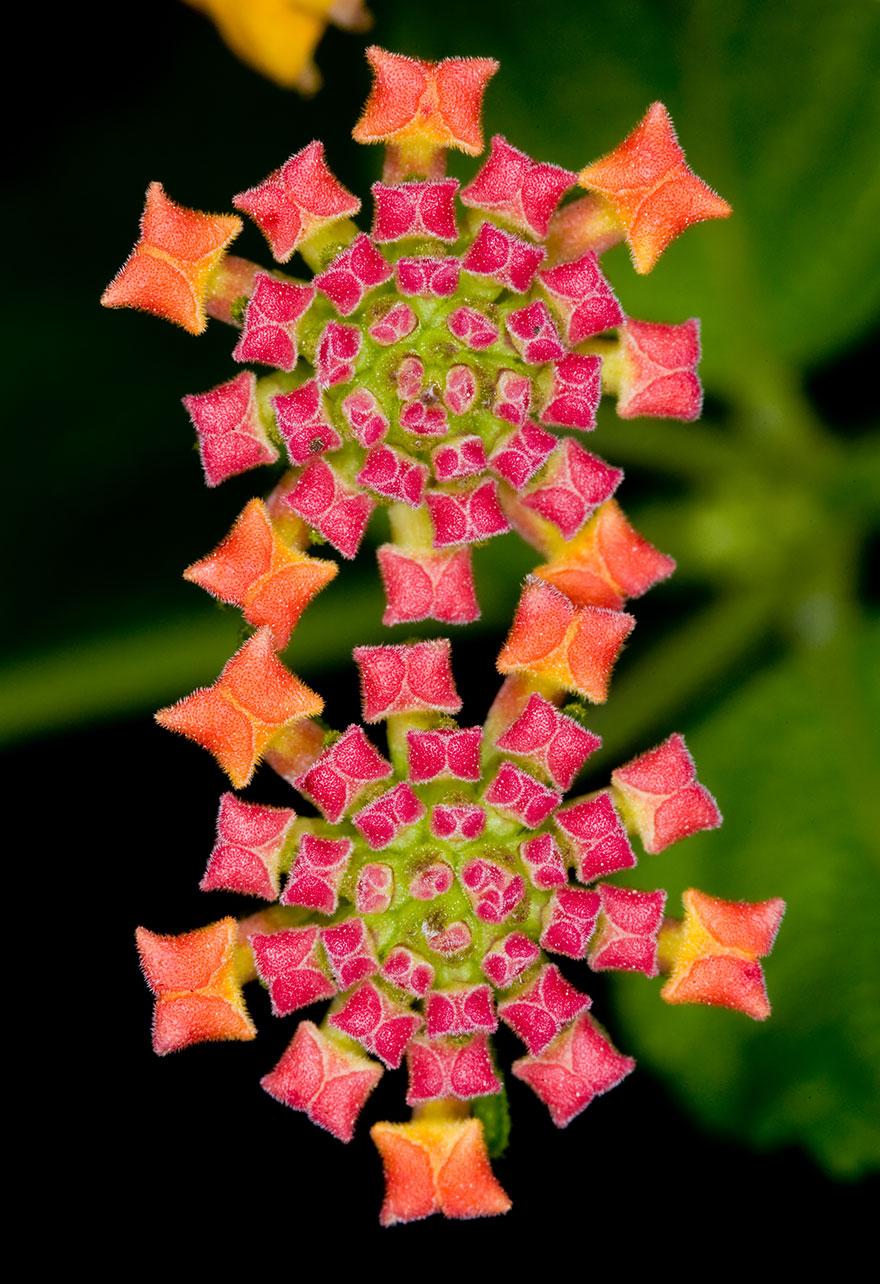 Цветок-калейдоскоп