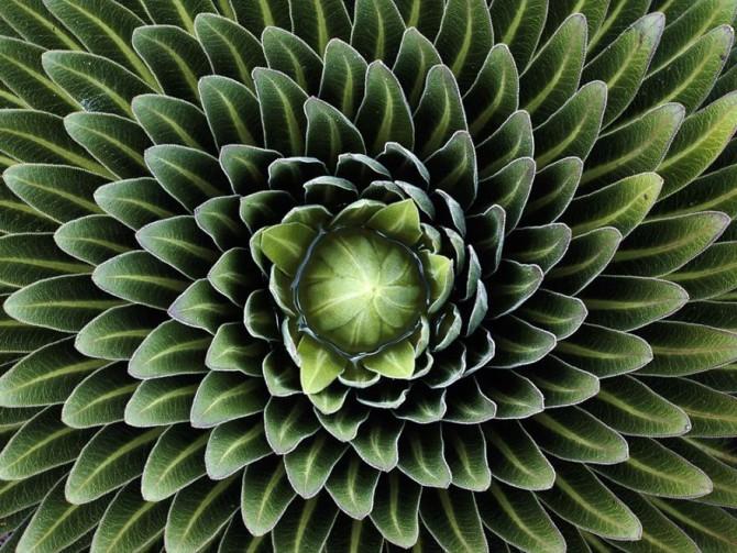 Фотографии геометрически правильных растений для любителей симметрии