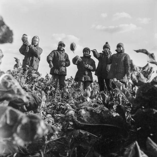 Студентки МАИ убирают картошку в подмосковном колхозе, 1981 год