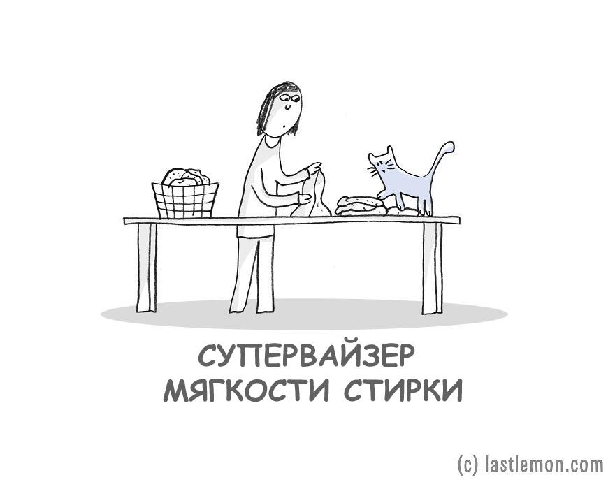 Важные работы кошки в доме