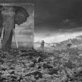 WASTELAND WITH ELEPHANT