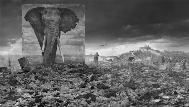 Мощные изображения диких животных призваны показать разрушение Земли