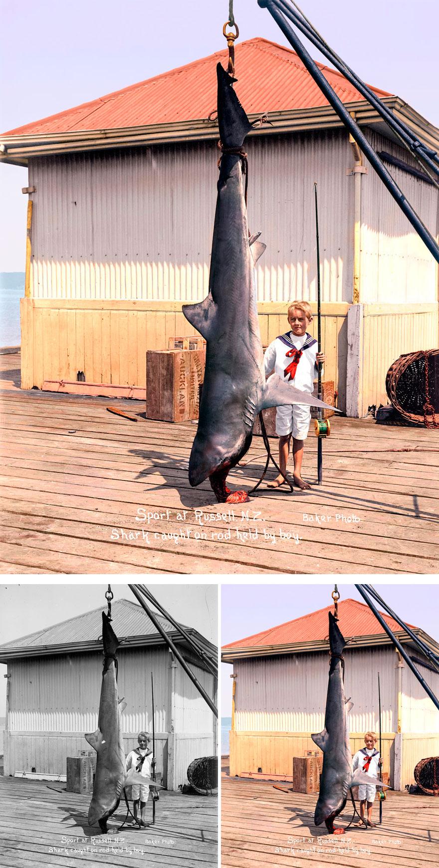 Пойманная акула, 1915