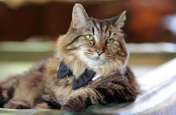 Молодость в душе: самый старый кот в мире, который не признаёт свой возраст