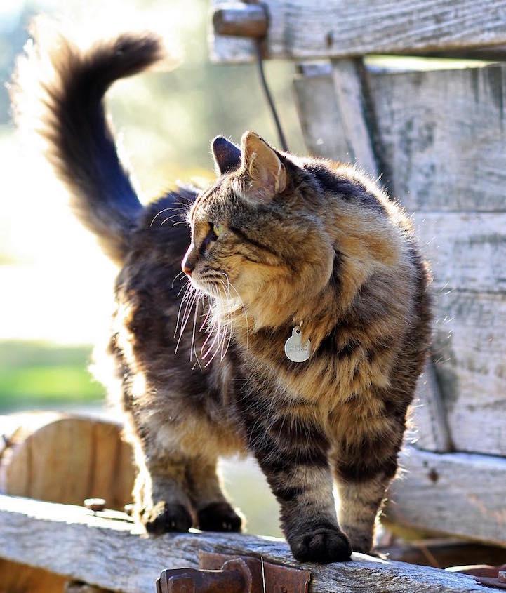 Вельвет - самый старый кот в мире