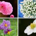 foods-flowers