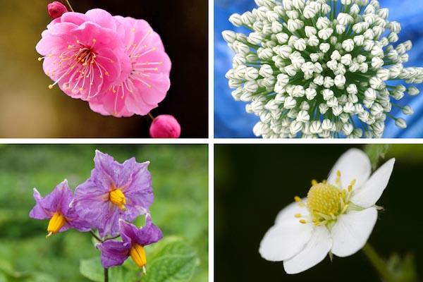 Как цветут ваши любимые продукты