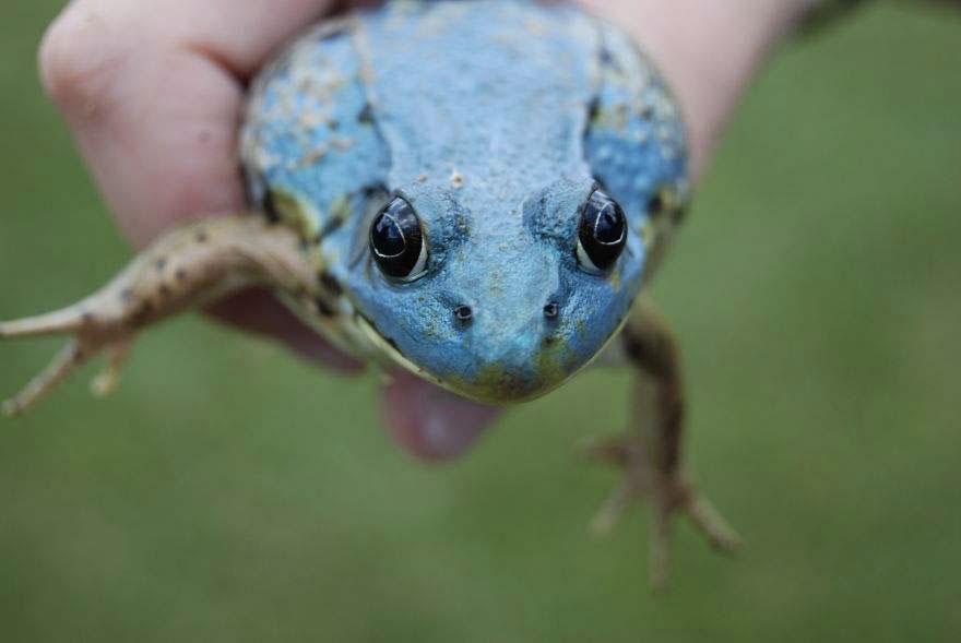 Фотографии необычных лягушек