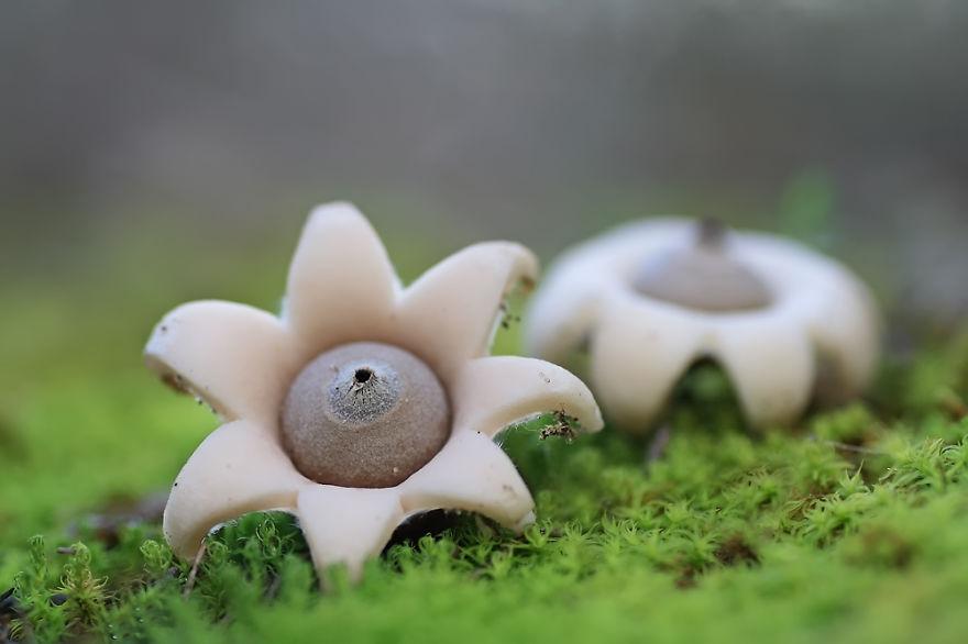 Самые завораживающие грибы