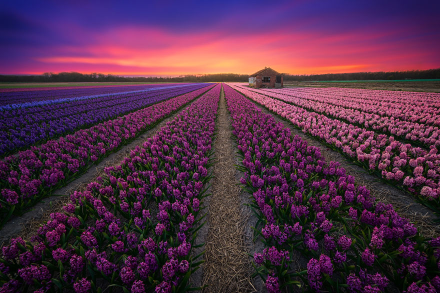 Фотографии Нидерландов от Альберта Дроса