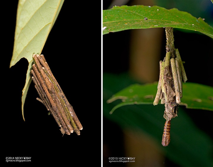 Личинкамешочницы(Psychidae)